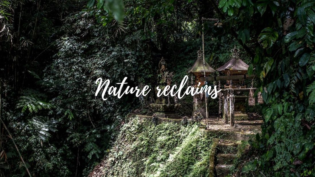 Nature reclaims from human spaces
